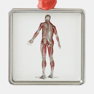 The Musculoskeletal System 5 Christmas Ornament