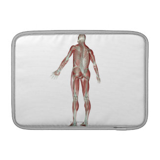 The Musculoskeletal System 5 MacBook Sleeve