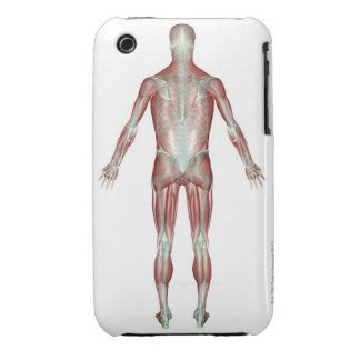 The Musculoskeletal System 9 iPhone 3 Cases