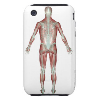 The Musculoskeletal System 9 iPhone 3 Tough Covers