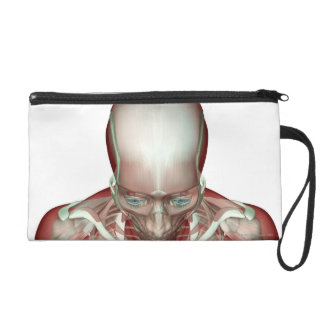 The Musculoskeletan of the Head and Neck 2 Wristlet Clutch
