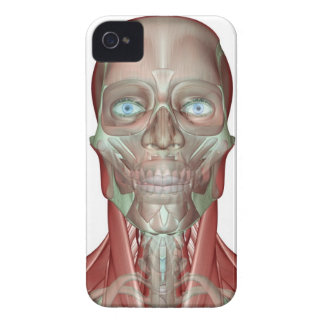 The Musculoskeletan of the Head and Neck iPhone 4 Case-Mate Cases