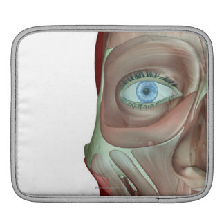 The Musculoskeleton of the Face iPad Sleeve