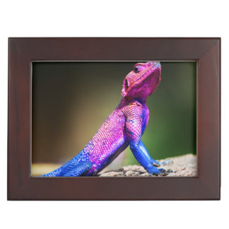 The Mwanza Flat-headed Agama on rock Keepsake Box