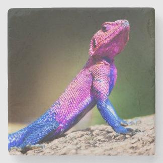 The Mwanza Flat-headed Agama on rock Stone Beverage Coaster