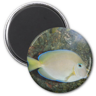 The Mysterious Fish Magnet
