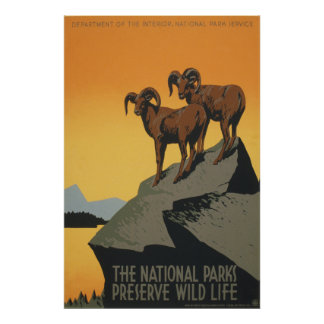 The National Parks Preserve Wild Life Poster