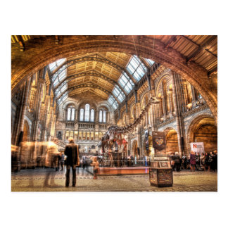 The Natural History Museum, London Postcard