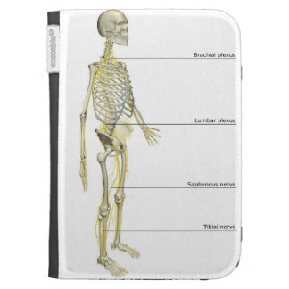 The Nervous System Cases For Kindle