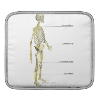 The Nervous System iPad Sleeves