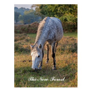 The New Forest Pony Postcard