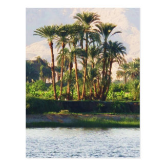 The Nile River in Egypt,  Luxor Postcard
