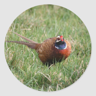 The Noisy Pheasant Classic Round Sticker
