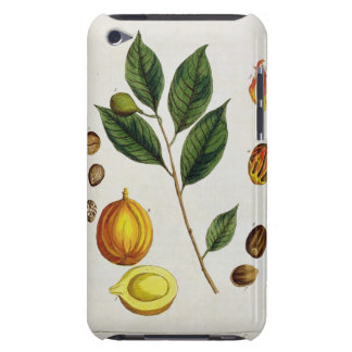 The Nutmeg, plate 353 from 'A Curious Herbal', pub iPod Touch Cover