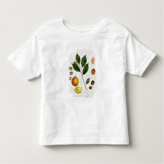 The Nutmeg, plate 353 from 'A Curious Herbal', pub Tee Shirt