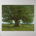 The Oak of Flagey, called Vercingetorix Posters