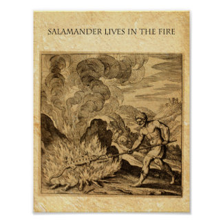 The OCCULT FIRE SALAMANDER Poster