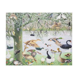 The Odd Duck Canvas Print