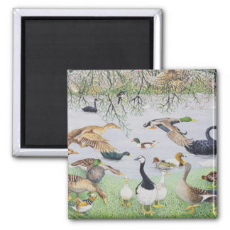 The Odd Duck Square Magnet