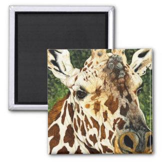 The Old Bachelor Giraffe Magnet