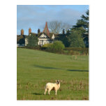 The Old Manor House, Wingrave Post Card