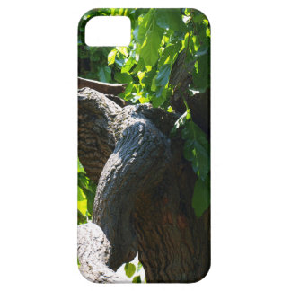 The old mulberry tree iPhone 5 cases