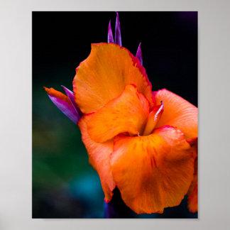 The Orange Crane Flower Poster