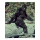 THE ORIGINAL 1967 BIGFOOT SASQUATCH PHOTO POSTER