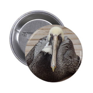 The Ornery Pelican Pinback Button