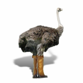 The Ostrich with Galoshes Standing Photo Sculpture