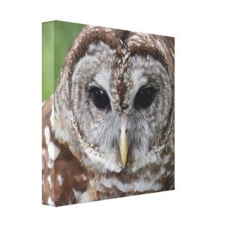 The Owl -- canvas art - Barred owl Canvas Prints