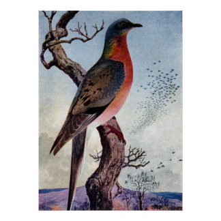 The Passenger Pigeon Posters
