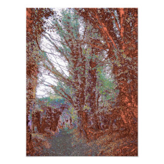 The Path Color Photo Print