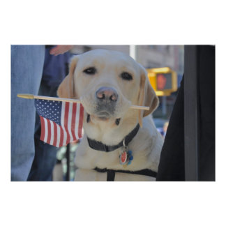 The Patriotic Dog Poster