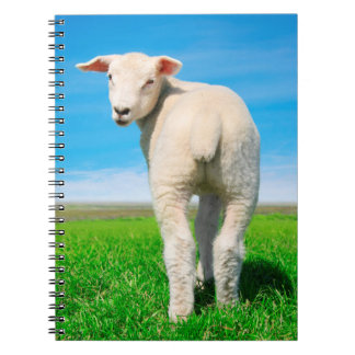 The peaceful sheep spiral notebook