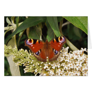 The Peacock Butterfly Greeting Card