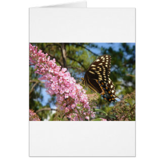 The Perfect Butterfly! Greeting Cards