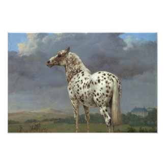 The Piebald Horse Photographic Print