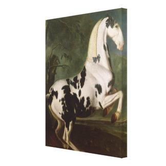 The Piebald Stallion at the Eisgruber Stud Canvas Print