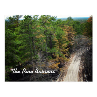 The Pine Barrens Postcard