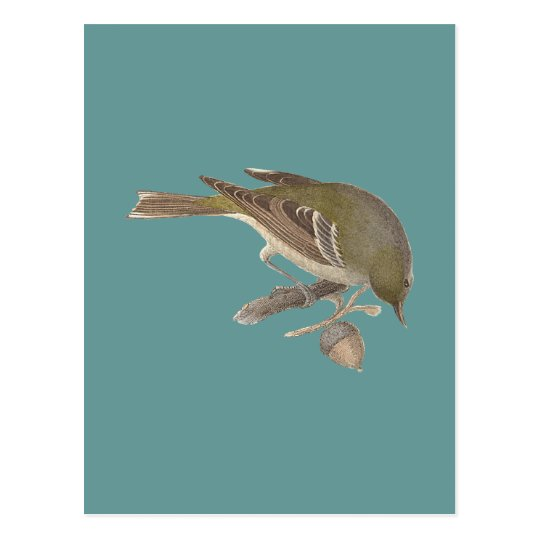 The Pine Warbler (Sylvicola pinus) Postcard