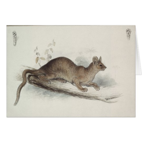 The Polecat, 19th century Card