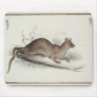The Polecat, 19th century Mouse Pad