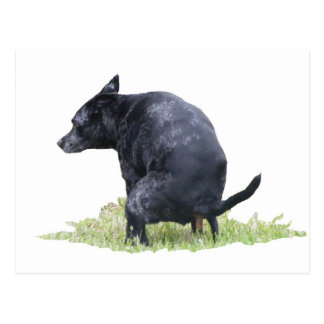 The Pooping Dog Ponders Postcard