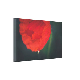 The poppy and the spider canvas print