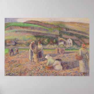 The Potato Harvest Poster
