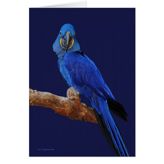 The Prince of Parrots Card