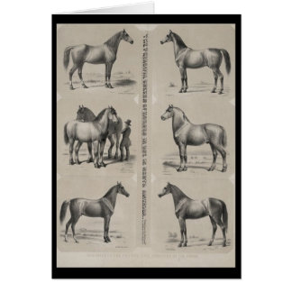 The Principal breeds of horses in use Greeting Card