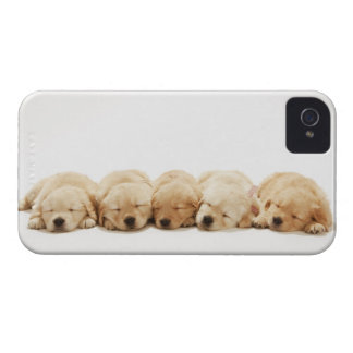 The puppies of the Golden Retriever Case-Mate iPhone 4 Cases