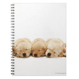 The puppies of the golden retriever spiral notebook